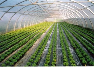 Resultado de imagen para cultivos de invernadero